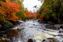 Stugaland Quebec Kanada Royaltyfria Bilder