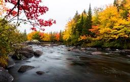 Stugaland Quebec Kanada Arkivfoto