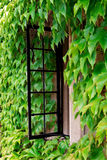 stugamurgrönafönster Royaltyfri Foto