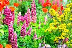 stugaträdgården blommar bakgrund royaltyfri foto