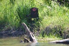 Stuhl auf Flussbank, Ahornblatt stockfotos