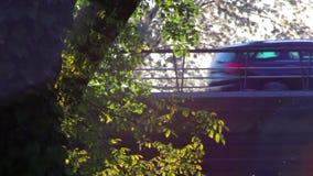 Stuifmeel en boombladeren in de wind bij schemer en verkeer stock video