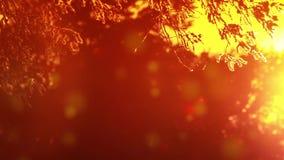 Stuifmeel en boombladeren op de wind stock footage