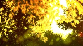 Stuifmeel en boombladeren op de wind stock videobeelden