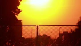 Stuifmeel en boombladeren op de wind in zonsondergang en stad stock footage