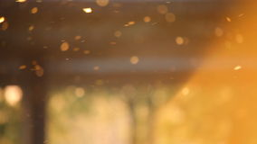 Stuifmeel op de lentezonsondergang stock videobeelden