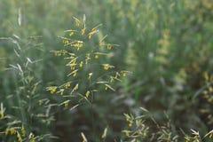 Stuifmeel op het gras stock foto's