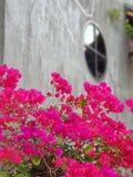 stuitende roze bloem stock foto