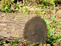 Stuk die van boomstam bij de grond liggen Royalty-vrije Stock Foto