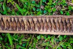 Stuk die van droog hout op gras in het hout liggen Stock Fotografie