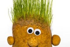 Stuk speelgoed aardappels met groen het leven haar Royalty-vrije Stock Foto