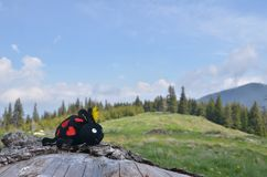 Stuk speelgoed lieveheersbeestje, weide, bos, hemel stock foto