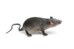 Stuk speelgoed rat Royalty-vrije Stock Afbeelding