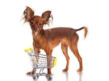 Stuk speelgoed Terrier met boodschappenwagentje op wit. Grappig weinig D Royalty-vrije Stock Afbeeldingen