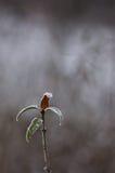 Stuk van de winter Stock Afbeeldingen
