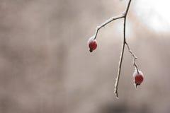Stuk van de winter Royalty-vrije Stock Foto