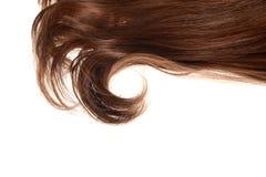 Stuk van donkerbruin bruin haar in een geïsoleerde krul royalty-vrije stock afbeelding