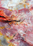 Stuk van een verstijfd van angst logboek stock afbeelding
