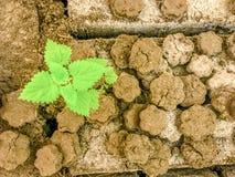 Stuk van gebarsten aarde met groene leavs stock foto's