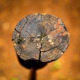 Stuk van hout op natte grond stock afbeeldingen