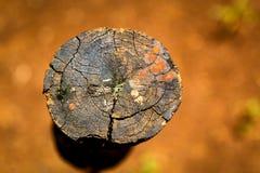 Stuk van hout op natte grond royalty-vrije stock foto