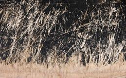 Stuk van oud gekrast hout Stock Foto