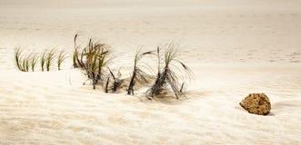 Stuk van rots op zandduinen, Te Paki Reserves Royalty-vrije Stock Foto