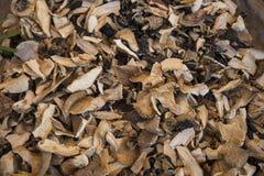 Stukken droge paddestoelen Royalty-vrije Stock Fotografie