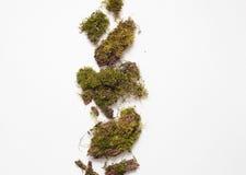 Stukken van mos op een witte achtergrond, mosdecoratie stock afbeelding