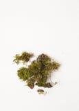 Stukken van mos op een witte achtergrond, mosdecoratie royalty-vrije stock fotografie
