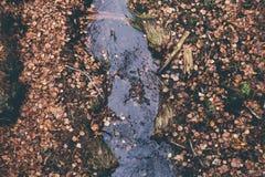 Stule do rio Foto de Stock