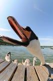 stum swan Royaltyfri Fotografi