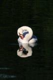 stum swan för oändlighet Royaltyfria Foton