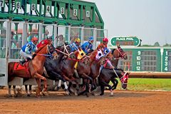 Stumbling Start. One horse nearly falls as horses break from the gate Royalty Free Stock Photo