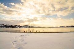 Stumma svanar i kallt väder i Hamresanden, Norge Arkivbilder