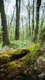 Stummel im grünen Gras Lizenzfreie Stockbilder