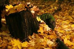 Stummel im Herbst lizenzfreies stockbild
