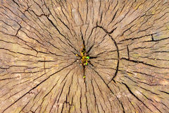 Stump Royalty Free Stock Image