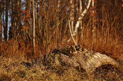 Stump Stock Photography