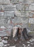 Stump Royalty Free Stock Photography