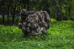 stump Imagens de Stock