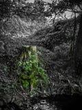 stump Imagens de Stock Royalty Free
