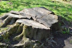 stump Foto de Stock