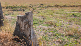 stump Fotografia de Stock Royalty Free