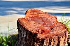 stump Foto de Stock Royalty Free