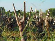 stump Fotografia de Stock