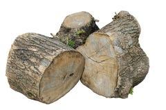 Stumps of  large tree Stock Image