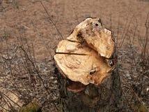 Stump alder Stock Photo