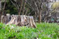Stump. This is all that remains of the tree Stock Photos