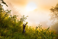 Free Stump And Bushes At Misty Dawn Royalty Free Stock Photos - 52650818